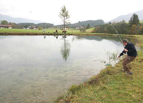 fischarten im teich bichlacher angelteiche angeln fischen tirol